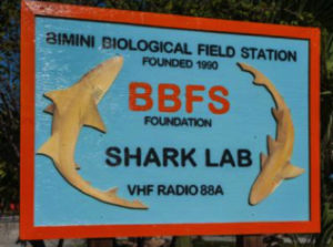 In My First Summer As A Volunteer For The Atlantic White Shark Conservancy I Had Opportunity To Meet Many Men And Women Involved Research