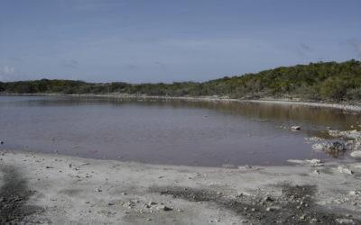 Anaconda salt pond becomes anoxic, spring 2015!